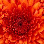Юлия Виват