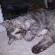 Алёна Жарикова (Нечет)